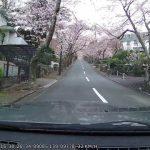 車窓からの桜並木